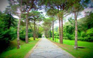 İstanbul'da Doğum Günü Kutlaması İçin Öneriler 2021 (Florya Atatürk Ormanı)